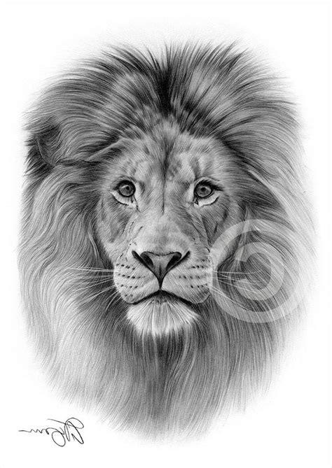 pin  pinfire  art lion drawing pencil drawings