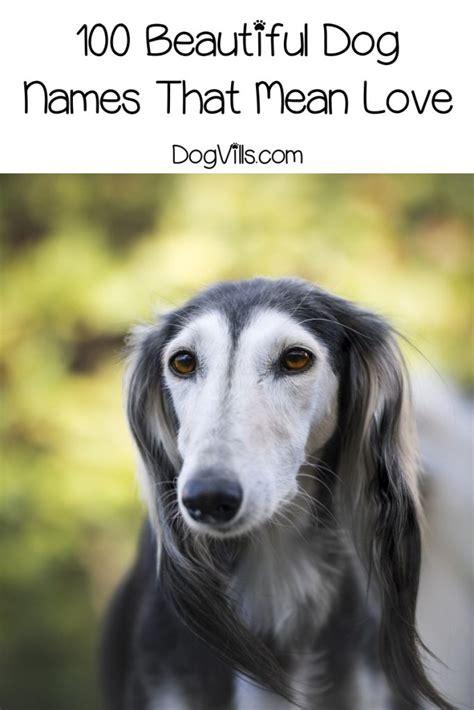 top  dog names   love dogvills