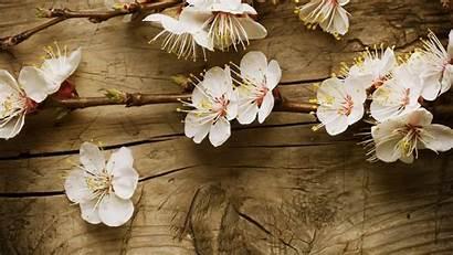 Wallpapers Blossom Cherry Desktop Spring Widescreen Flower