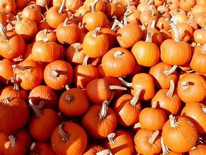 Pumpkin Wallpapers Backgrounds Desktop Wallpapersafari Keywords