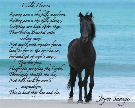wild horses horse poetry poem origami cranes friend personality mustangs borderline thousand selected kate