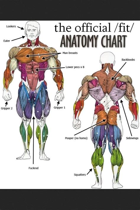 Complete anatomy has a wider depth and breadth of offerings than other anatomy platforms currently available (e.g. Haha. Get smart | Muscle anatomy, Human anatomy chart, Human anatomy and physiology