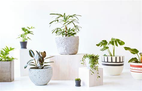 decorative pots for indoor plants pot for indoor plants rseapt org