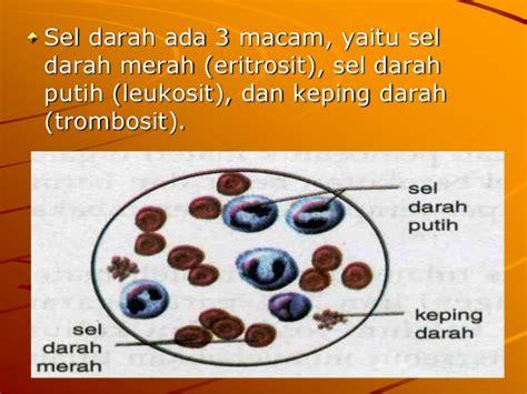 Kultur jaringan termasuk dalam ruang lingkup bioteknologi. Sistem Peredaran Darah Pada Manusia