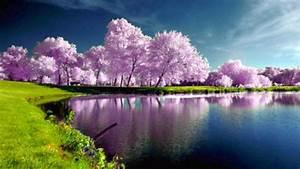 Purple, Trees, Nature, 4k, Wallpaper