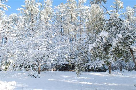 Snow Day Lynne Meredith Golodner