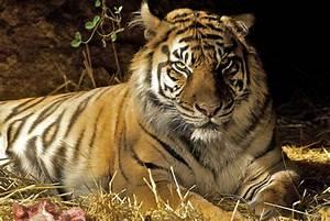 health benefits of wild animal brytne loin sheclick com
