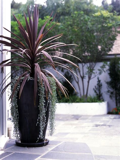 25 best ideas about large outdoor planters on