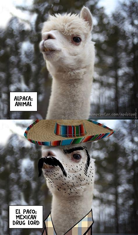 Alpaca Meme Alpaca El Paco By Nedesem Meme Center