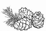 Coloring Pine Cones sketch template