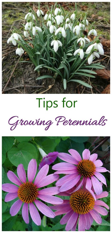 do perennials grow back every year top 28 do perennials grow back every year 1000 images about how does your garden grow on