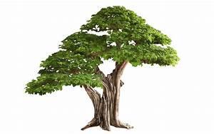 Bonsai Tree Texture [green] by Wildjaeger on DeviantArt