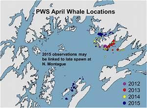 Humpback Whales | Gulf Watch Alaska