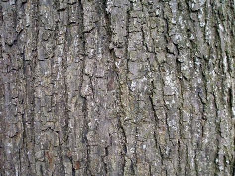 bark of tree wallpapers tree bark wallpapers
