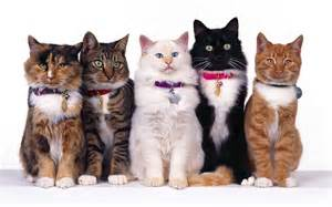 all in a row cats wallpaper 16249894 fanpop