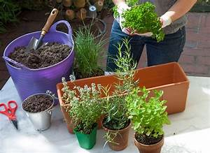Comment Remplir Une Grande Jardinière : plantes condimentaires en jardini re ~ Melissatoandfro.com Idées de Décoration