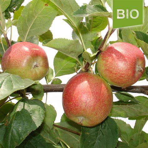 Miete Für Den Herz Apfel Garten Für 3 Bio Apfel Summerred Der Herzapfelhof Im Alten Land