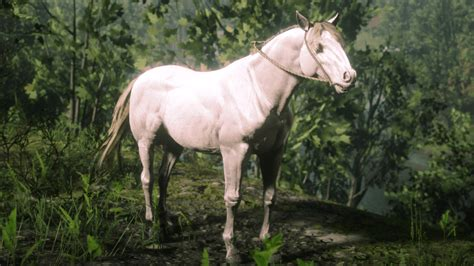 horse rdr2 andalusian perlino drop brandywine locations wild annesburg dead redemption breeds found north fall water