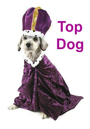 top dog names      popular top ten