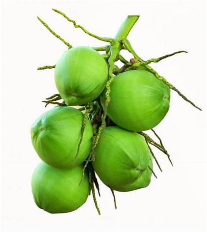 Coconut Bunch Coco Blanco Aislado Verde Premium