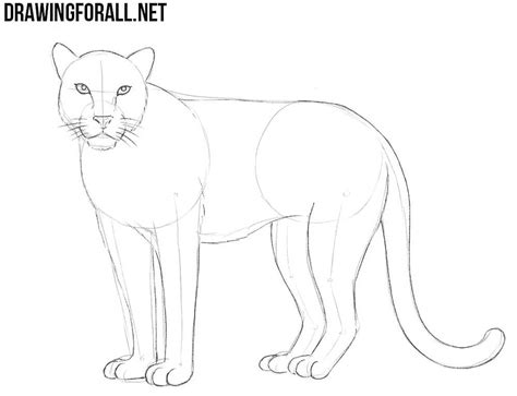 draw  leopard drawingforallnet