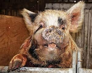 25 Ugly and Disturbing Animals