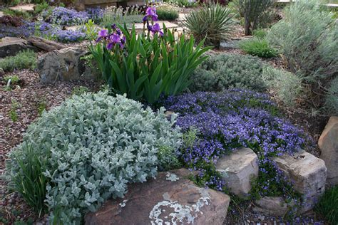 landscape plant stimulate your landscape with plant select resilient plants for gardeners in the rocky