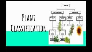 Lesson 3 Plant Classification
