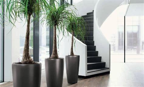 plantes de bureau plantes de bureau florastore