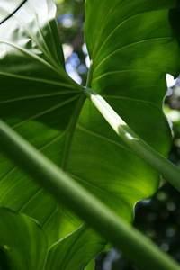 Grande Plante Verte : mes yeux en guadeloupe grande plante verte ~ Premium-room.com Idées de Décoration