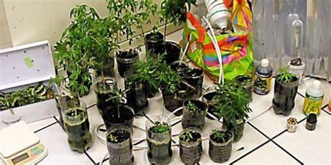 chambre culture cannabis millau arrêté pour vol et culture de cannabis