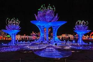 Free, Images, Light, Display, Holiday, Winter, Lotus, Blue, Purple, Lighting, Stage, Festival