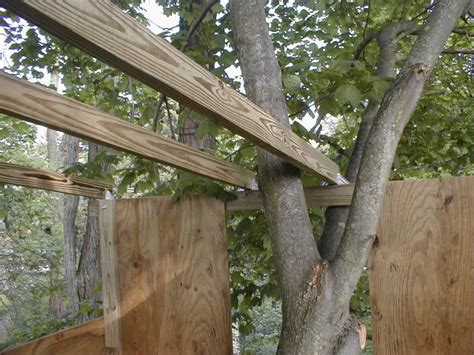 treehouse roof  roof beams