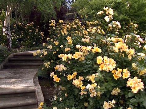 cut flower garden design cut flower garden hgtv