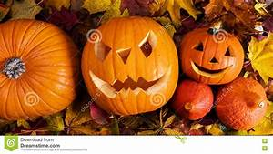 Halloween, Pumpkins, Carved, Jack-o-lantern, In, Fall, Leaves, Stock, Photo