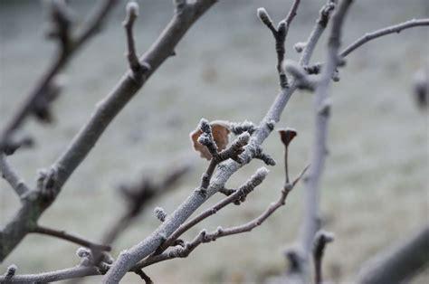 apfelbaum schneiden anleitung apfelbaum schneiden anleitung vom experten plantura