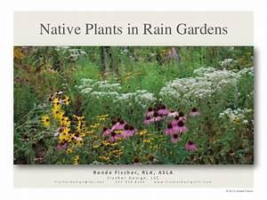 Native Plants For Rain Gardens From Fischer Design April