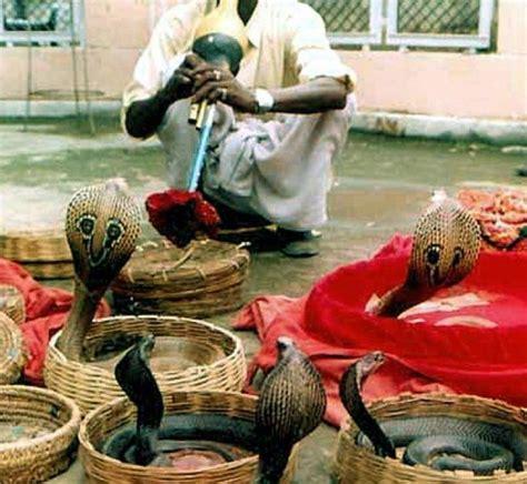 bureau des impots inde mécontent il lâche des dizaines de serpents dans un