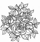 Coloring Roses Rose Printable Flower Flowers Nature Play sketch template