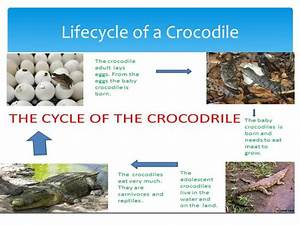 Ppt - Life Cycles Powerpoint Presentation