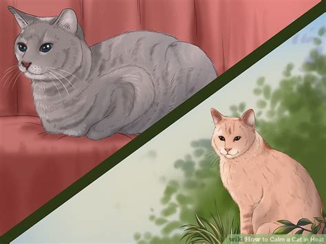 how is a cat in heat how to calm a cat in heat 11 steps with pictures wikihow