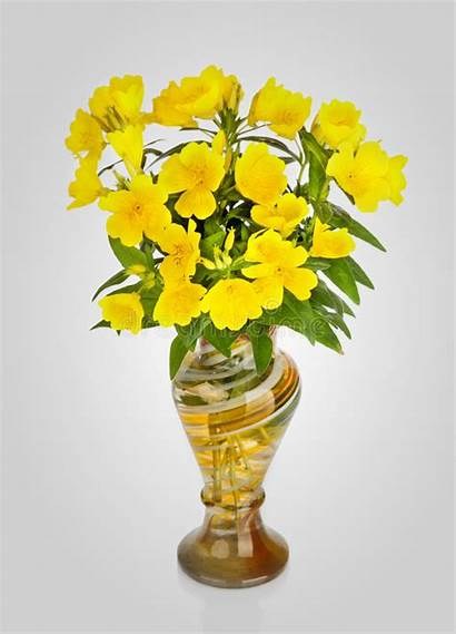 Yellow Vase Flowers Vaso Fiori Bloemen Vaas