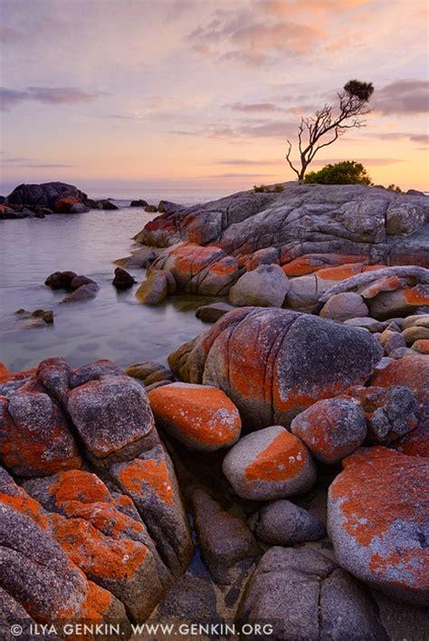 lonely  oak  sunrise image fine art landscape