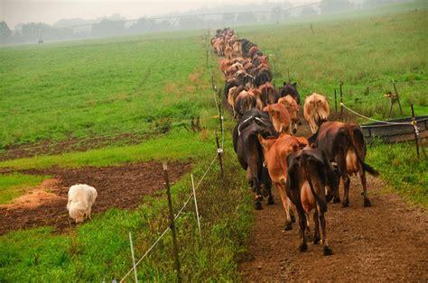 small scale farming  restore americas rural towns