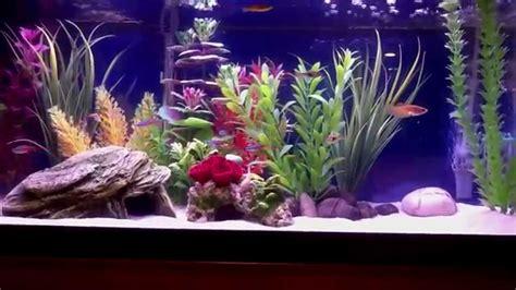 Ideas For Fish Tank by 20 Gallon Freshwater Aquarium