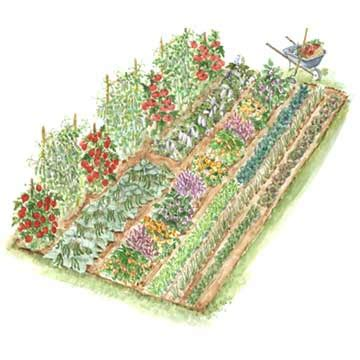 vegetable garden layout designs from the garden to the table garden layout and plant list