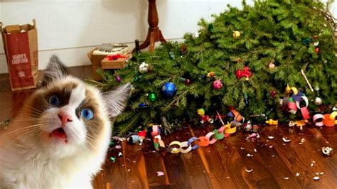 funny cats love christmas trees compilation  youtube