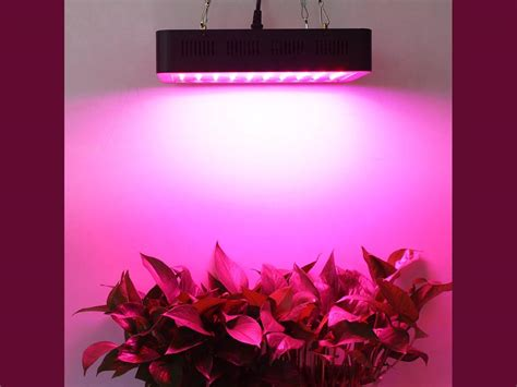 best indoor led grow lights reviews lightmetunnel 300w led grow light review help indoor