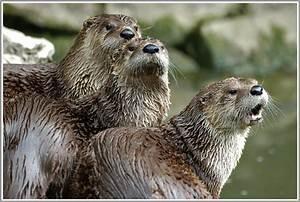 Tierpark Bad Mergentheim : otter wildpark bad mergentheim forum f r naturfotografen ~ Watch28wear.com Haus und Dekorationen
