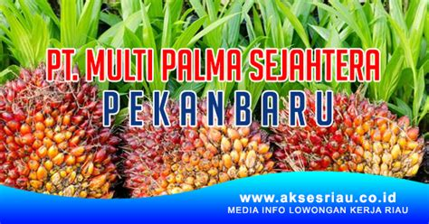 lowongan pt multi palma sejahtera pekanbaru juli